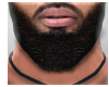 Nash Beard
