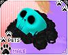 [Pets]Phir  shldrskull R