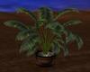 Resizable Palm Planter