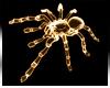 Spider * Neon