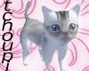 SnowWhite Kitten