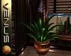 ~V~Paradise Plant Pot