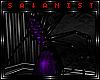[ S] Royal Spider
