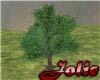 JF Ficus Tree