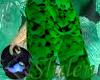 SHILEN Emerald Pants