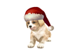 FN Chirstmas Puppy Pet