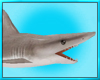 Scuba Dive Shark
