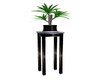 plant with table
