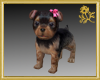 Terrier Puppy Pet