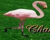 Cha`Zoo flamingo