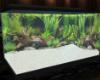 Fish Tank (No Fish)