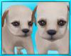 Cute Puppy Play