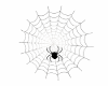 Spider Web Derivable