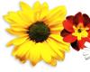 ~Summer Flowers