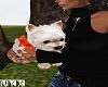 Celebrity Pup 2