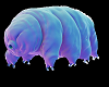 Water Bear Huge Army
