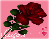 Red Rose=Love