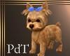 PdT Cairn Terrier Animat