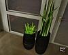ϟ Modern Indoor Plants