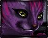 V| Mad Kitten Pink *Pllw