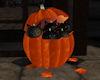 !Halloween Kittens