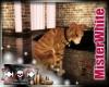 MRW|Daisy's Cat 2