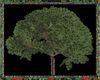 ⚡ Tree