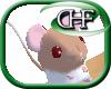 HFD Rat - Fawn Hood