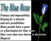 what blue roses mean