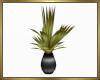 Vased Plant
