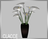 C white lillies