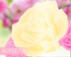 Aly! Valeria hip roses