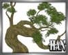 [H]Bonsai Branches