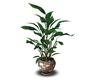 maseta con planta