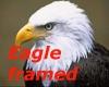 Eagle picture framed