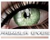 [V4NY] Primula Eyes 05