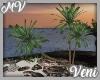 *MV* Palm Trees