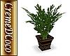 CDC-Blackfoot-PlantV2aGr