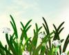 Field ,,Paradise''