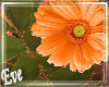 c Orange Flower Bush