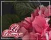 Hydrangea Pink w/Leaves