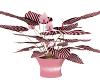 $A$ zebra plant 2
