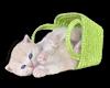 ~Oo Kitten Green Basket