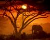 [MA] Safari Pic1