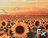Sunflower Background F