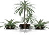 Plants of 3