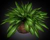 SummerTime Plant