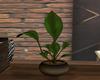 (K) R512 plant