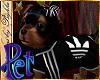 I~Yorkie Puppy*Sport.Pet