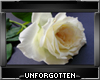 Perfect Rose - White